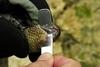 【老杜聊海蛇】海蛇很毒很危險嗎?