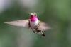 小小蜂鳥能看見人類無法想像的色彩