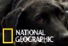 協助美國退伍軍人走出創傷的服務犬