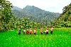 永續農遊 探索宜蘭友善土地的故事
