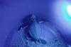 第三季鯨豚及海龜擱淺報告 海龜救援72件創五年新高