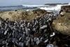 海洋中發現跨物種的貝類「傳染性癌症」