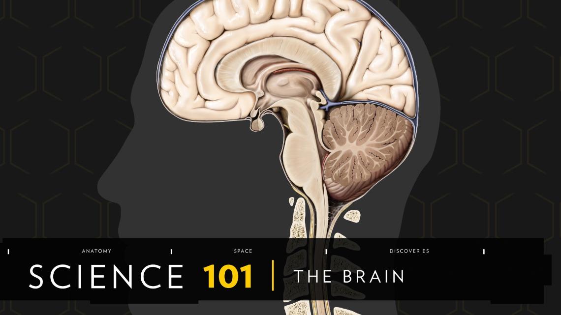 101科學教室:人腦