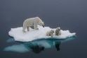 等到我們長大時還有冰嗎?