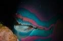鸚哥魚的牙齒