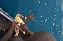 在索羅門群島的行船日常