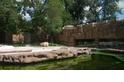 《白熊計畫》– 北京動物園