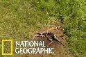 因尾巴而慘遭殺害的長頸鹿