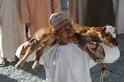 尼日瓦牲口市場