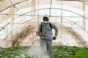 劇毒農藥賺很大 一年賣數十億美元 愈窮國家用愈兇