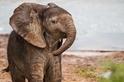 注視著我的小象