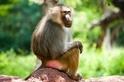 研究:人類接觸野生動物恐招致病毒入侵 三種類別動物風險尤高