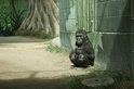聖地亞哥動物園的年輕大猩猩