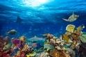 疫情過後,海洋即將迎來「再次」傷害?從現在開始選擇海洋友善防曬