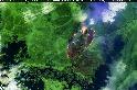 「殭屍火」來襲? 破紀錄野火再臨北極圈 碳匯恐不保