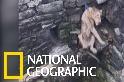 看印度村民協力救出摔入水井的獅子