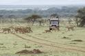 保育是新的商業模式 肯亞馬賽地主:「我的土地已屬於大象、牛羚和獅子們」