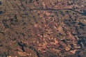 COVID-19從何而來? 專家:動物傳人疾病的共通點在「森林砍伐」