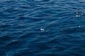 海廢恐增加全球病菌傳播風險 研究:黑潮流經臺灣後,塑膠微粒多五倍