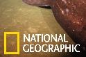 卡瓦奇海底火山內的神祕「睡鯊」