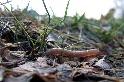 外來種蚯蚓讓北極「回春」 植被增量相當於升溫3℃ 科學家憂融雪加速