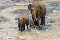 愛玩水的大象