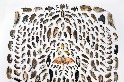 照片中的232隻動物全死於「貓殺」