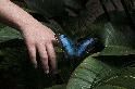 蝴蝶與手指