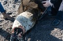 俄羅斯發生海洋生物大量死亡事件,可能危及瀕臨絕種的海獺與其他脆弱物種的生存