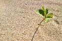 足跡與小樹苗