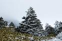 氣候變遷正威脅著南韓的「耶誕樹島」