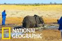 年輕大象身陷水槽,所幸及時發現!