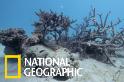 烏波盧島的珊瑚浩劫