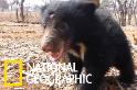 活潑可愛的懶熊孤兒「毛克利」