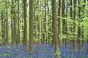 夢幻藍森林