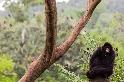 一本正經的猴子
