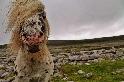 巴倫國家公園的小馬