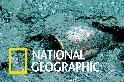 跟著「深海發現者」探索北卡羅來納州外海的沉船遺跡