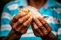 消失的淡水魚 WWF報告:餵飽2億人的重要產業,1/3族群卻已瀕臨滅絕