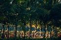 棕梠樹下的遊行