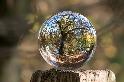 回歸吸碳大隊 研究:20年近6000萬公頃森林重生 等同一個法國面積