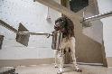 狗狗也能嗅出COVID-19?