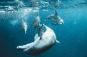 鯨豚調查局:有科學證據,才能理性討論鯨豚保育——專訪臺灣大學獸醫學院楊瑋誠教授