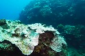 監測臺灣珊瑚白化危機 綠色和平:十株有六株未能完全復原