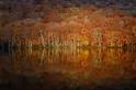 湖畔秋意:青森的紅葉