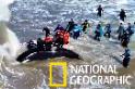 感動!阿根廷救援團隊成功解救擱淺虎鯨