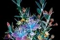 紫外光照出新花樣