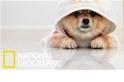 你家的狗狗有話跟你說,你懂嗎?