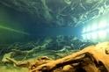 日本北陸秘境 埋沒千年的魚津巨大杉林