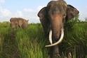 如何嚇跑大象